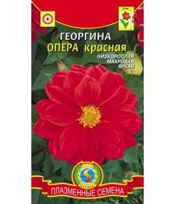 Георгина опера красная