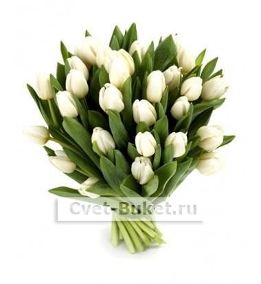 Цветы - Белые тюльпаны