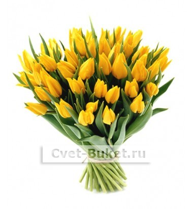 Цветы - Желтые тюльпаны