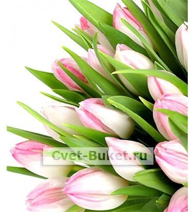 Цветы - Розовые тюльпаны