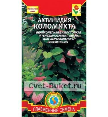 Семена - Актинидия коломикта