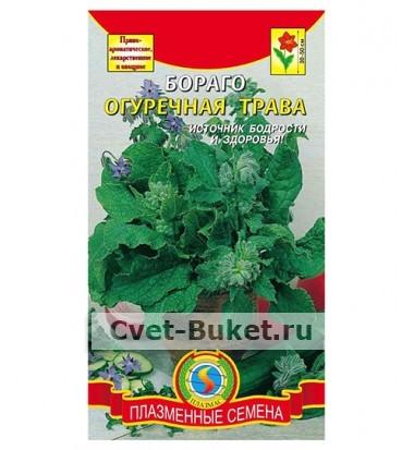 Семена - Бораго Огуречная трава
