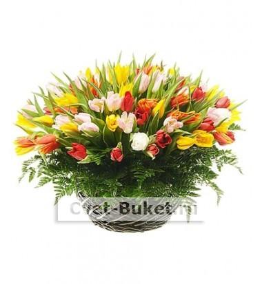 Букет тюльпанов 20