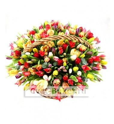 Букет тюльпанов 52