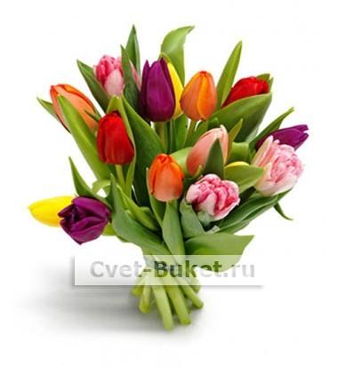 15 Тюльпанов разноцветные