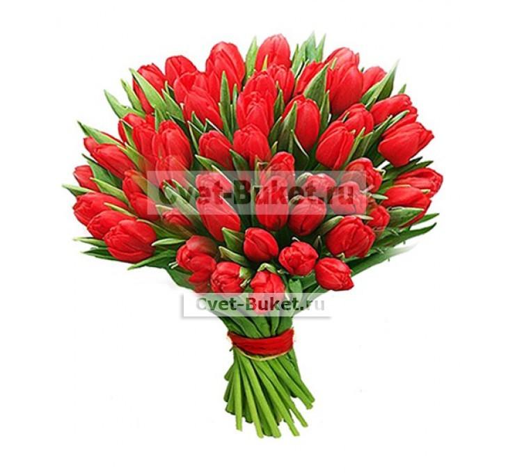 Купить тюльпаны оптом в москве цена доставка транспортной компанией цветов из амстердама